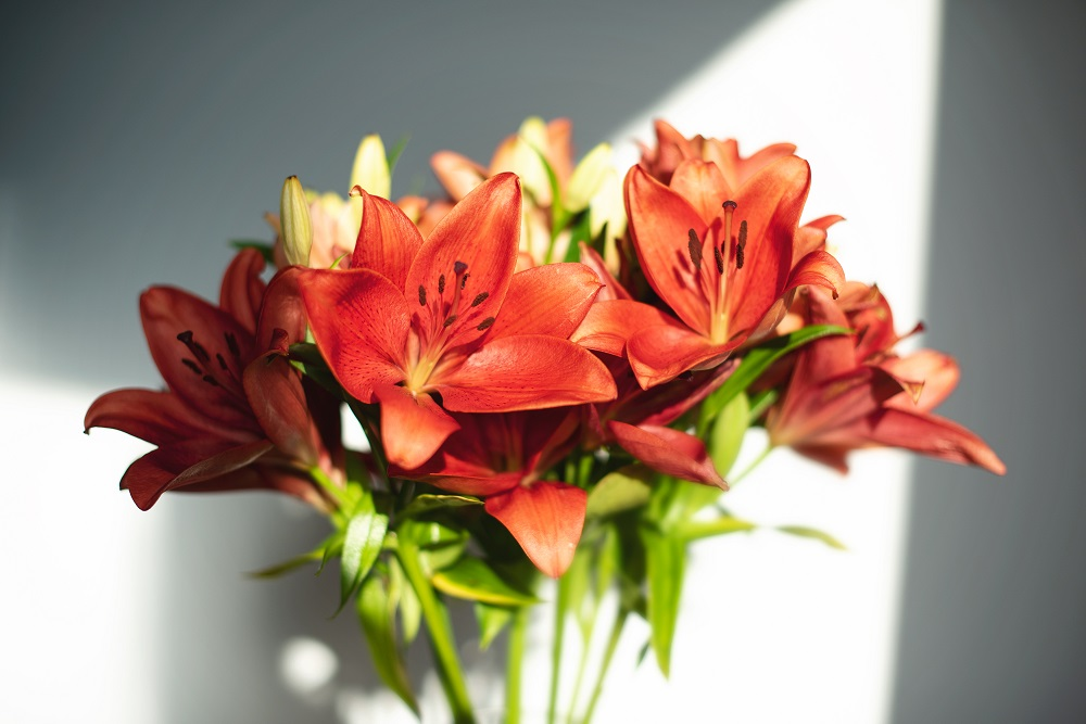 flores para un hombre - lirios