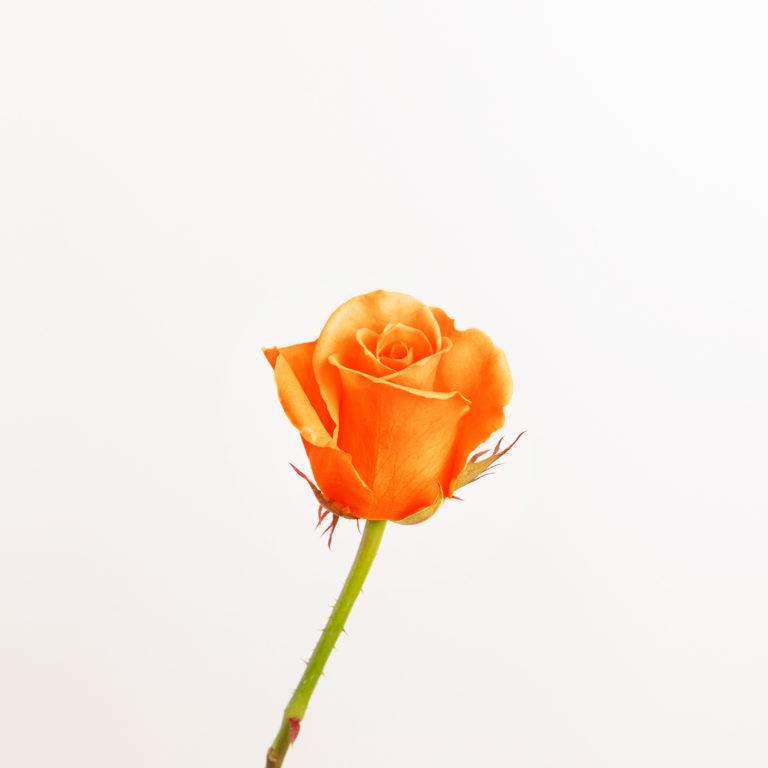flores naranja - rosa