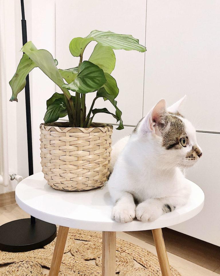 Planta con un gato