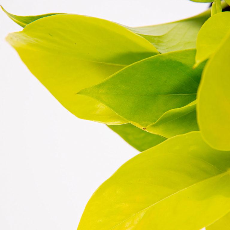 Planta que purifica el aire