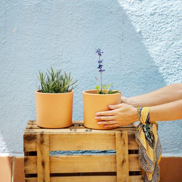 plantas aromáticas online lavanda y salvia