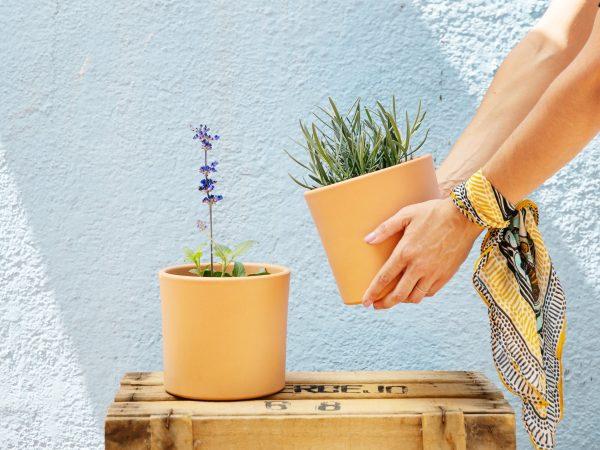 comprar plantas aromaticas