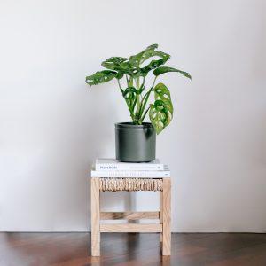 Planta de salón