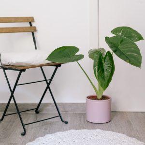 Plantas de poca luz