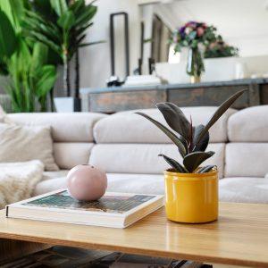 plantas para el salón