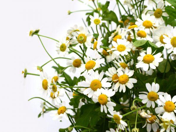 plantas aromáticas cocina