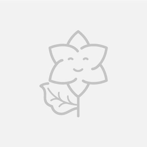 15 rosas blancas con jarrón