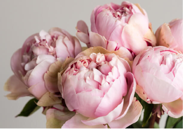 Blumensträuße mit Versand | Colvin
