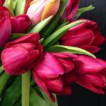 Tulipani in vaso o in giardino? A te la scelta!