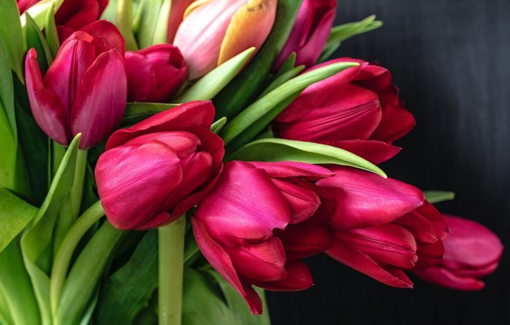 coltivazione tulipani
