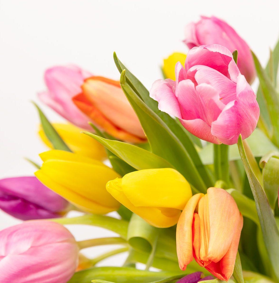 fiori per la festa della mamma tulipani