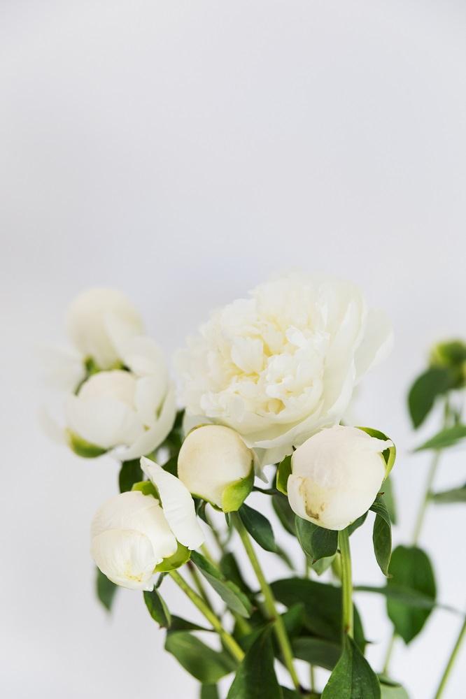varietà di peonie bianchi