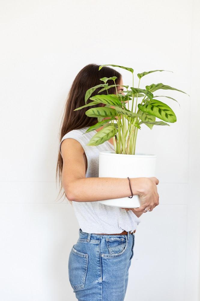 piante che vanno di moda