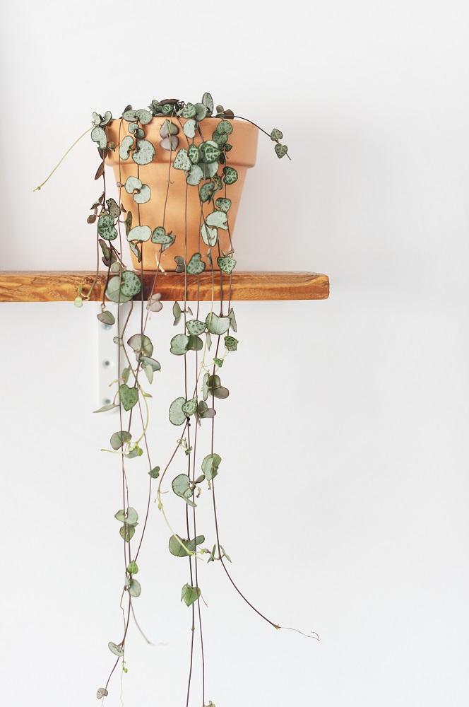 unboxing pianta Cathia