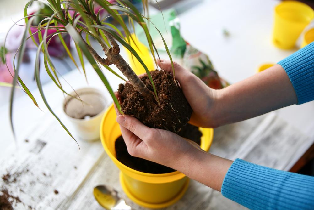 como trapiantare le piante