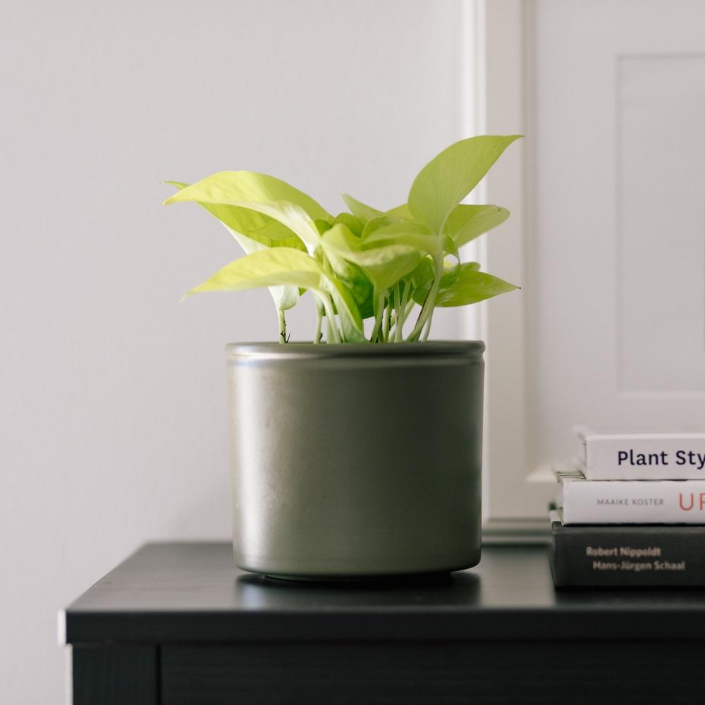 lavorare con le piante