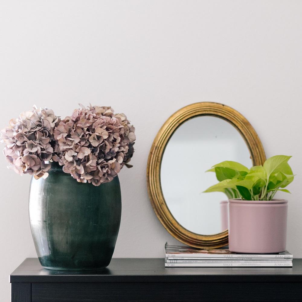 piante in casa Colvin