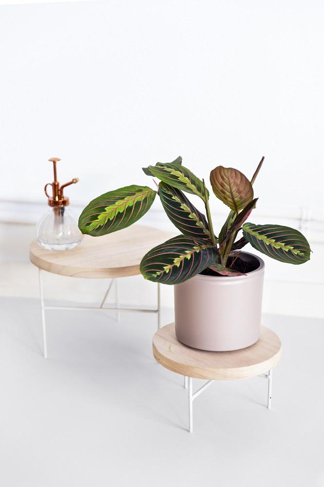 dubbi sulle piante