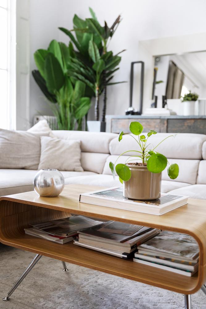 salotto con piante 1