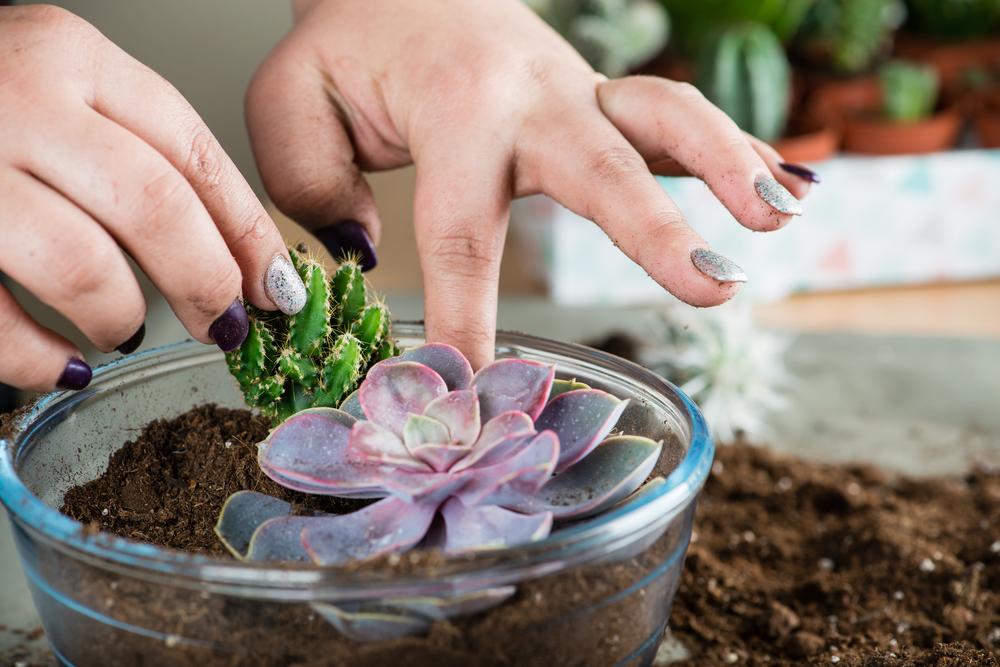 terrario con piante 2
