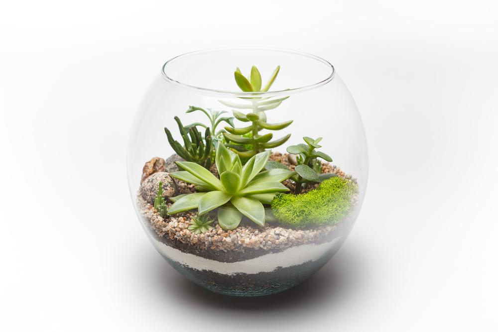 terrario con piante 1