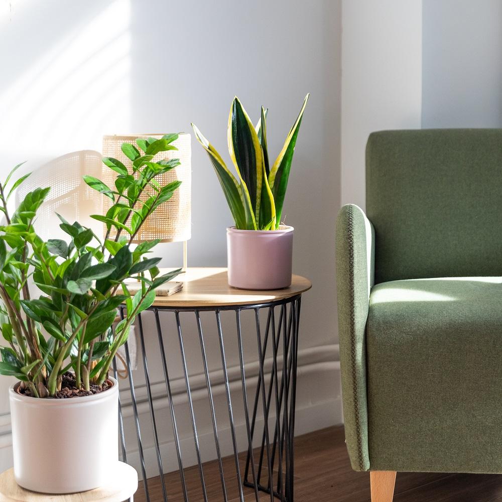 piante colvin online