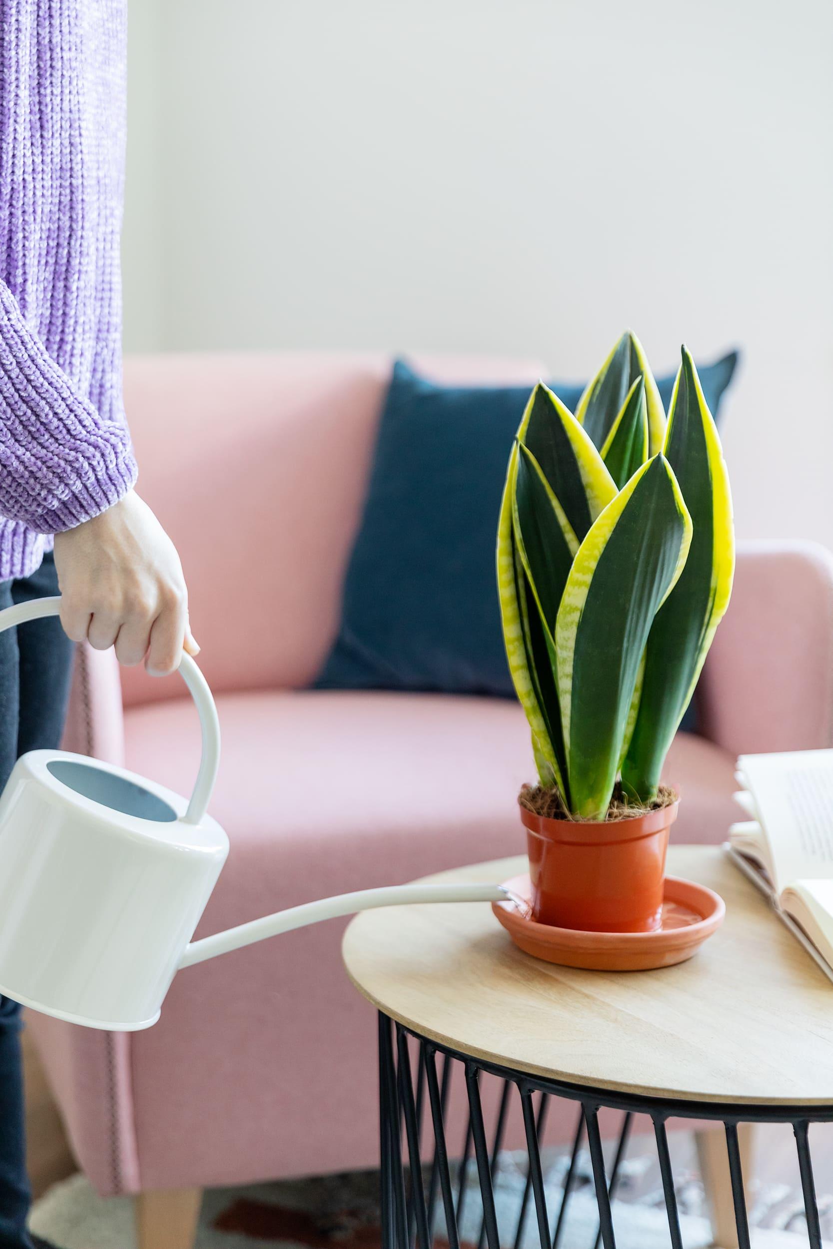 Irrigazione nel piatto - piante