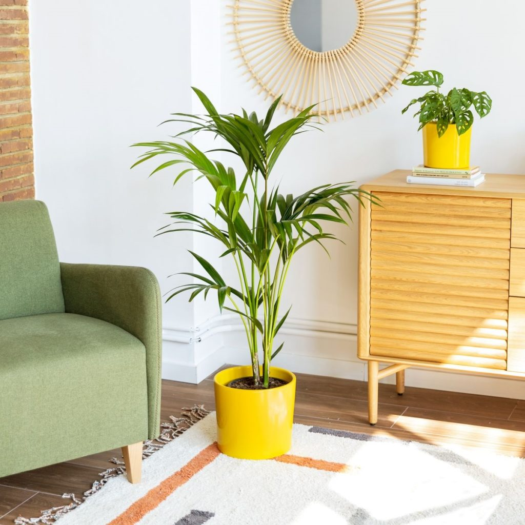 pianta palma uccello del paradiso