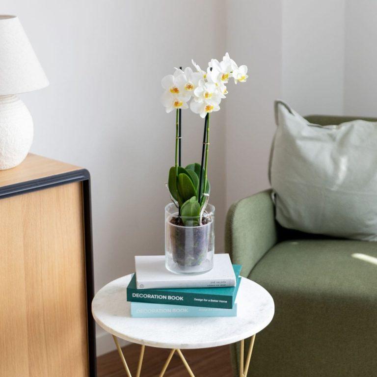 orchidea bianca per la festa della mamma