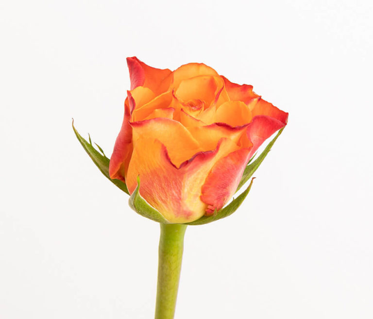 mazzo di rose per la Festa della Mamma