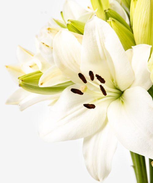 fiori bianchi per te