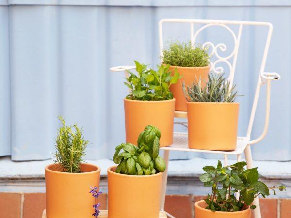 piante aromatiche in vaso