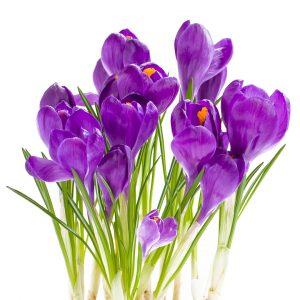 Fiori di colore violetto