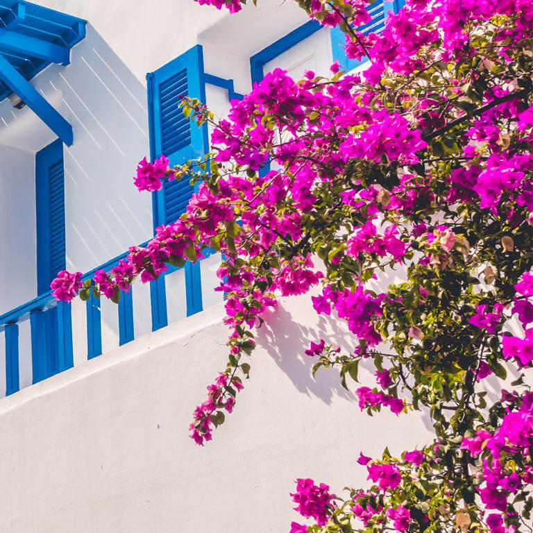 Plantas coloridas para exterior