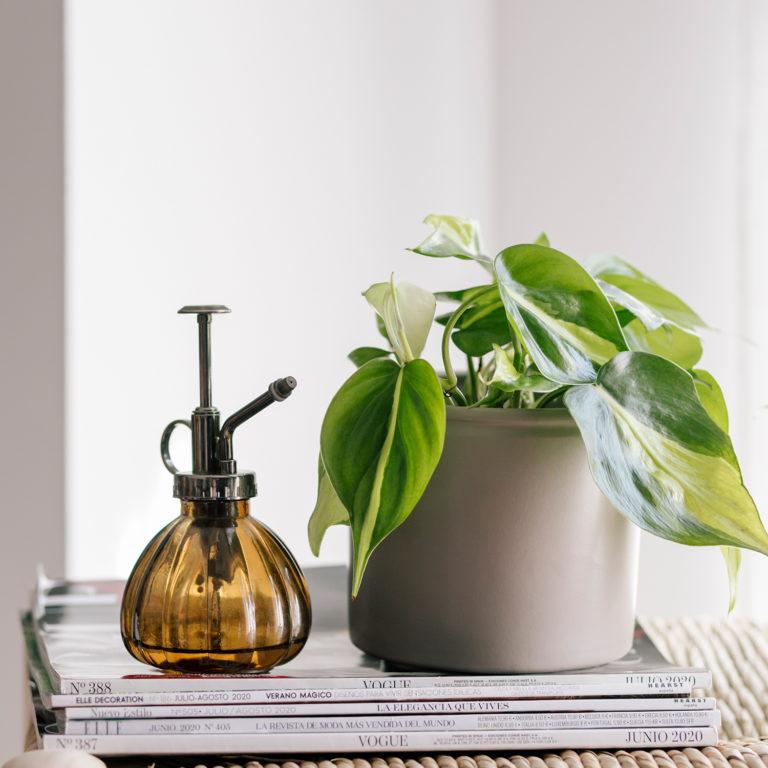 plantas para a casa-de-banho