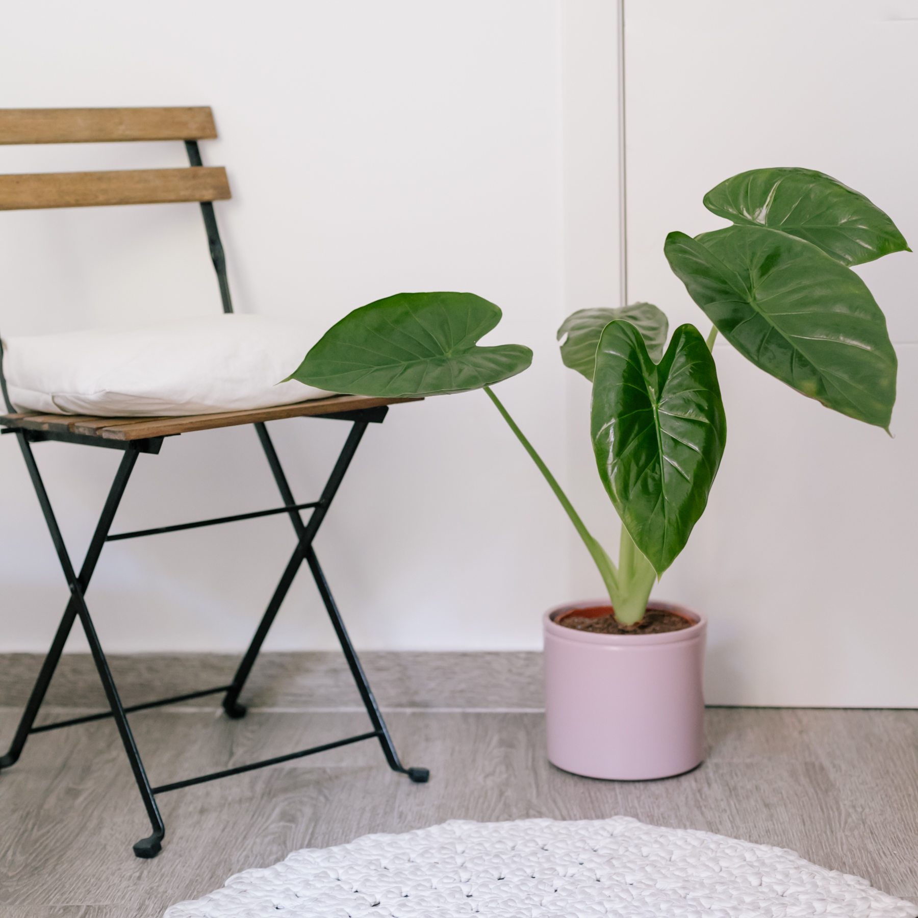 plantas de pouca luz