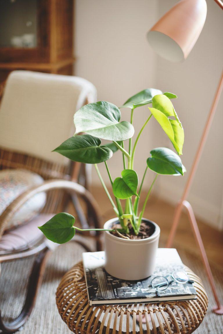 plantas pequenas