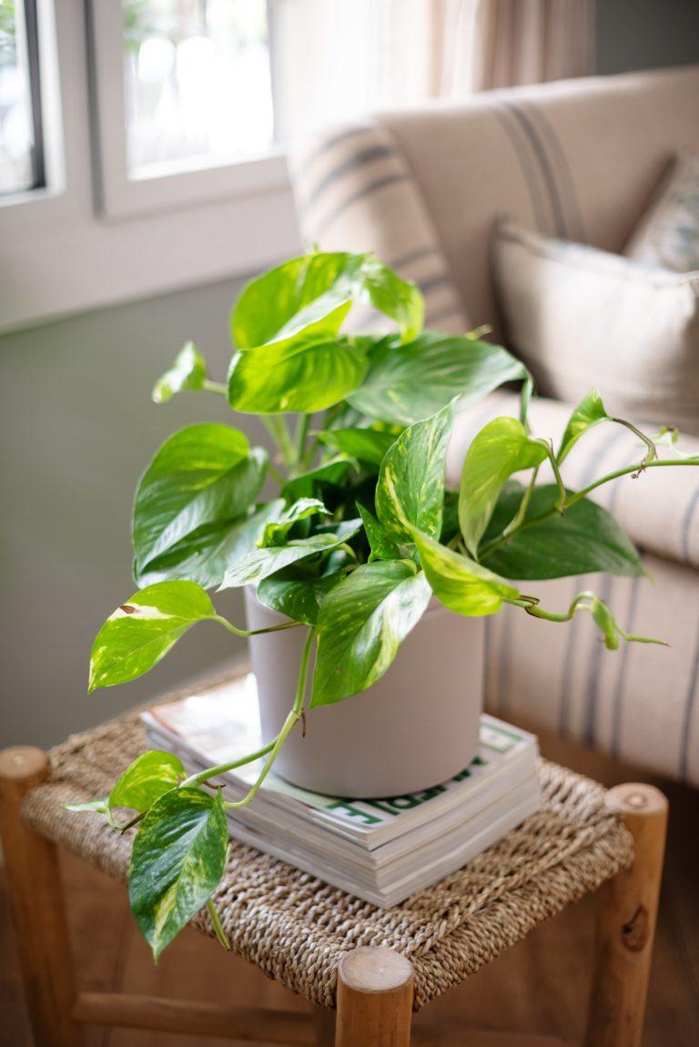 Planta Photos