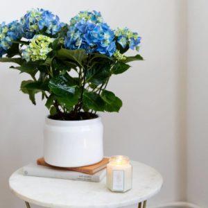 pack regalo hortênsia azul, vaso e vela dia da mãe