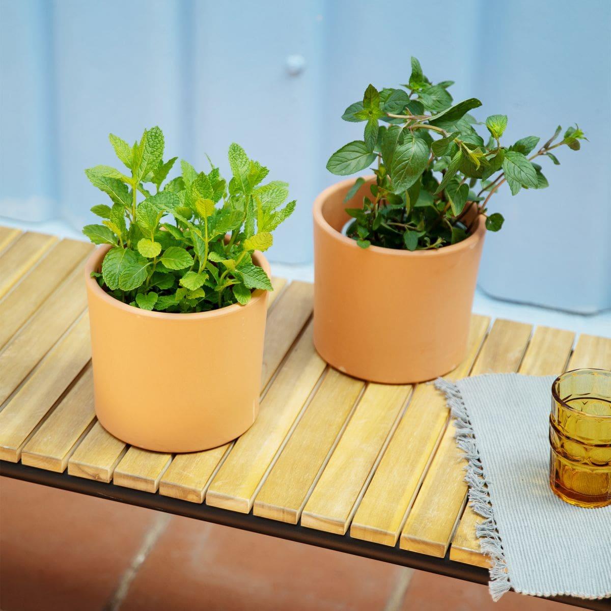plantas aromáticas online chocolate e hortelã