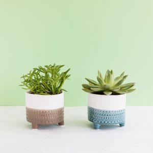 Plantas suculentas em vasos