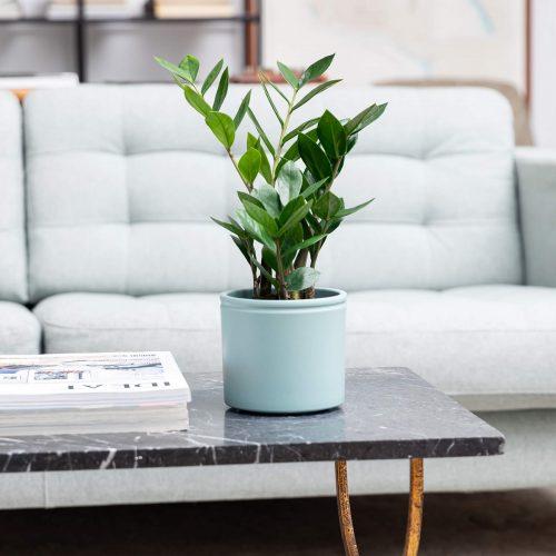 Planta de interior em sala