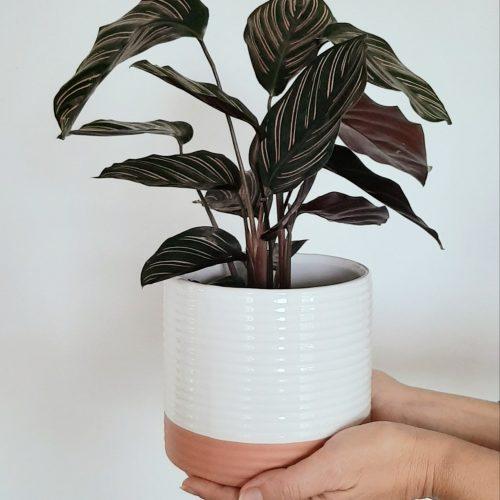 plantas de inverno
