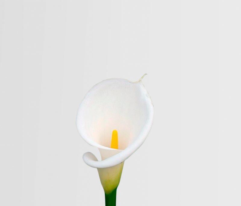 Oferecer flores no Dia da Mãe