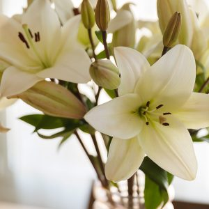 Floreiro com lírios brancos